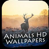 Animal wallpapers hd