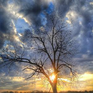 tree rise.jpg