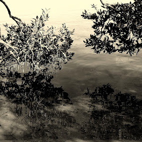 Skimming Trees by Lizz Condon - Nature Up Close Trees & Bushes ( water, reflection, black and white, trees )