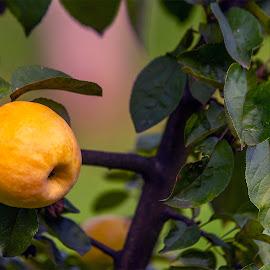by Stanley P. - Food & Drink Fruits & Vegetables