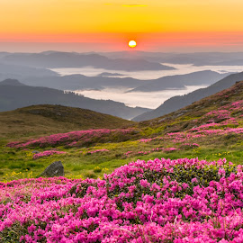 Greetings from Heaven by Adrian LUPSAN - Landscapes Sunsets & Sunrises ( sunrise, flowers, mountains, forest, rhododendron, fog )
