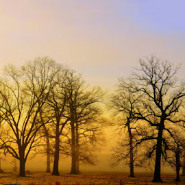 Barren Trees in Morning Fog by Michael Smith - Landscapes Prairies, Meadows & Fields ( missouri, winter, fog, trees, landscapes )