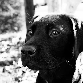 by Ashley Jill - Animals - Dogs Puppies