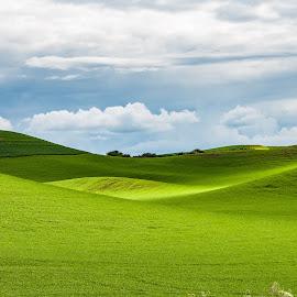 The Palouse by Brian Allison - Landscapes Prairies, Meadows & Fields ( idaho, hills, palouse, green, landscape, farming, fields )