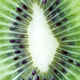 Kiwi by Robert  Płóciennik - Food & Drink Fruits & Vegetables ( plant, juicy, single, diet, tropical, object, circle, exotic, macro, nature, fresh, kiwi, ingredient, vegetarian, wet, closeup, dessert, isolated, fruit, texture, green, seed, agriculture, snack, section, organic, tasty, nutrition, sweet, color, food, background, ripe, healthy, eating, vitamin, part, natural )