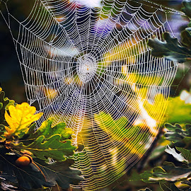 web by Tomasz Marciniak - Nature Up Close Other Natural Objects