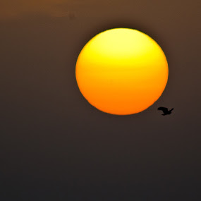 by Mohammed Arief - Landscapes Sunsets & Sunrises ( path, nature, landscape )