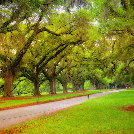 Plantation by Lori Wallace - City,  Street & Park  Historic Districts