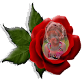 App Red Rose Photo Montage apk for kindle fire