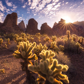 Kofa National Wildlife Refuge by Gannon McGhee - Landscapes Deserts ( yuma, refuge, national, arizona, wildlife, sunrise, cholla, kofa, cactus )