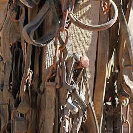 Old horse  by Annette Lagunas - Artistic Objects Antiques ( old horse, horse, grab the horse, western, halters, leather )