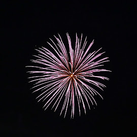 Starburst by Lacey Fiorelli  - Public Holidays July 4th ( holiday, night photography, 4th of july )