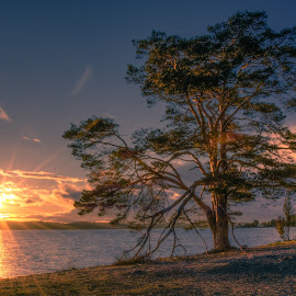 Sun Gazing by Bojan Bilas - Landscapes Sunsets & Sunrises ( tree, ruissalo, sunset, finland, landscape, baltic,  )