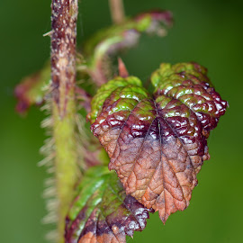 On the turn by Stephen Crawford - Nature Up Close Leaves & Grasses ( colour, turn, macro, changing, leaves, close up,  )