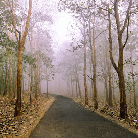 A walk in the woods. by Bijoy Anupam - Novices Only Landscapes ( curve, forrest, nature, trees, landscape, nature trail, misty, natural beauty )