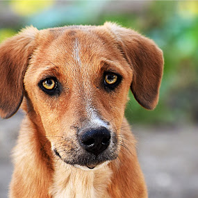 by Dinesh Pandey - Animals - Dogs Portraits (  )
