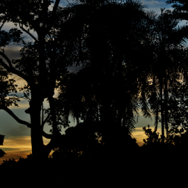 Tree's silhouette - Itapura SP by Marcello Toldi - Nature Up Close Trees & Bushes
