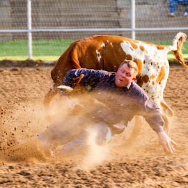 Steer Wrestling by Scott Thomas - Sports & Fitness Rodeo/Bull Riding ( cowboy, cow, steer, rodeo, wrestling )