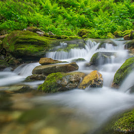 mountain river by Costin Mugurel - Nature Up Close Water ( mountain, nature, waterscape, forest, river )