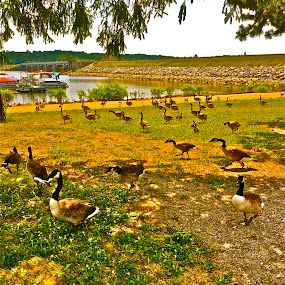 Feeding the ducks by Chris Young - Instagram & Mobile iPhone ( water, sky, tree, green, ducks, wildlife, yellow, black )