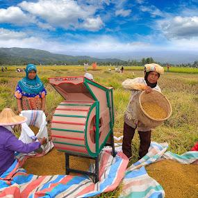 Paddies Farmer by Taufik Taspa - People Family ( paddy field, farmer, farmland, human interest, natural )