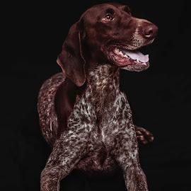 Roxy by Susan Pretorius - Animals - Dogs Portraits