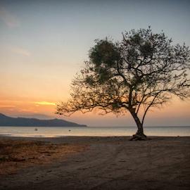 Playa Brasilito by Annette Flottwell - Landscapes Beaches ( atardecer, playa, arbol, brasilito, nicoya, beach, sunset, tree, guanacaste, chilamate )