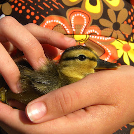 Rescue Baby by DB Channer - Animals Birds