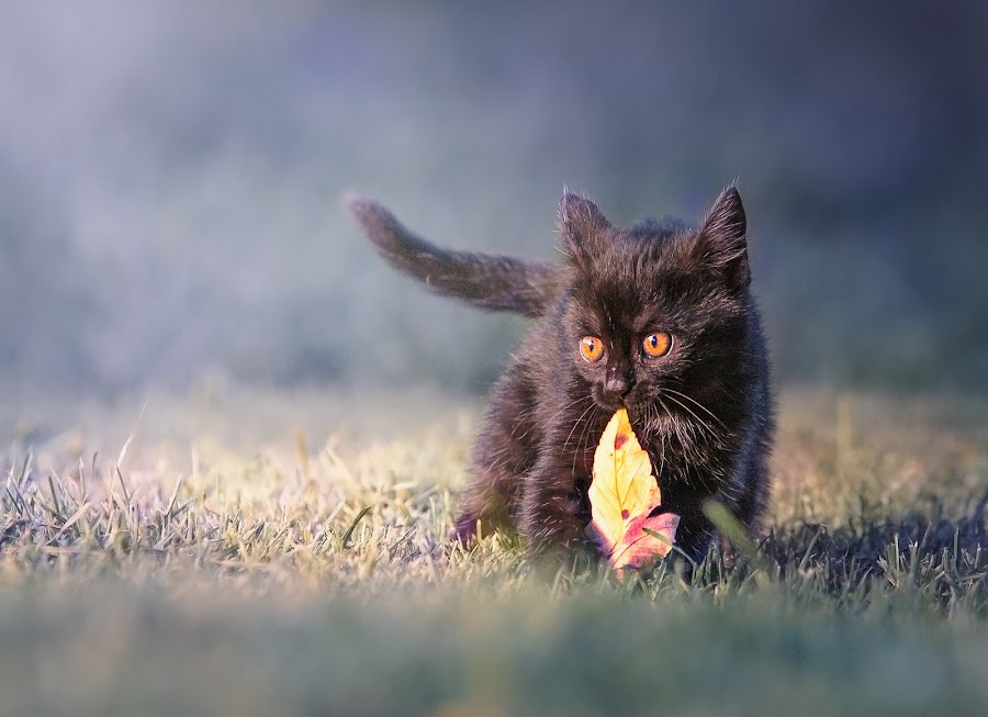 by Radek Winter - Animals - Cats Kittens