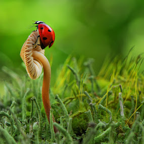 For luck by Cvetka Zavernik - Nature Up Close Mushrooms & Fungi ( mushroom, macro, forest floor, ladybug, bokeh )