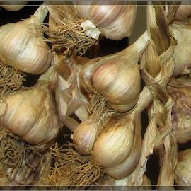 Garlic by Ognjen Weinacht - Nature Up Close Gardens & Produce
