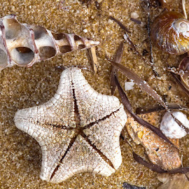 Washed Up by Lynnie Taylor - Nature Up Close Sand ( sand, shells, washed up, starfish )