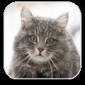 Game Find animals APK for Windows Phone