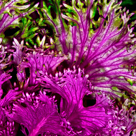 Ornamental cabbage by David Winchester - Nature Up Close Leaves & Grasses