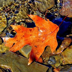 Lake reflections leaf by Carol Milne - Artistic Objects Other Objects