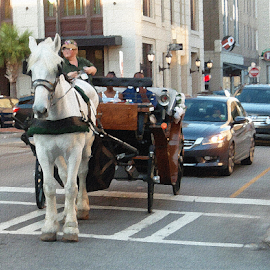 Horse Transport by Edward Gold - Digital Art Places ( horse, road, automobiles, street, buildings, white horse, brown, horse carriage, cross walk,  )