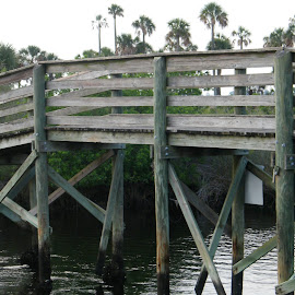 Walking bridge from Jenkins Park to Jenkins island  by Donna Probasco - Novices Only Objects & Still Life (  )
