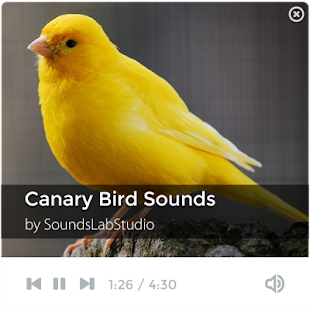 Canary Bird Sounds - screenshot