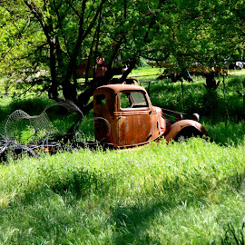 Rust by Kathleen Koehlmoos - Transportation Automobiles ( abandoned truck, discarded trucks, discarded cars, rust, old truck,  )