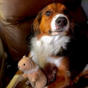 Proud  by Hugh McLaren - Animals - Dogs Portraits