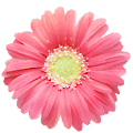 Free PG Flowers - Sticker Pack from Photo Grid APK for Windows 8
