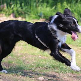 by Antonella Ori - Animals - Dogs Running