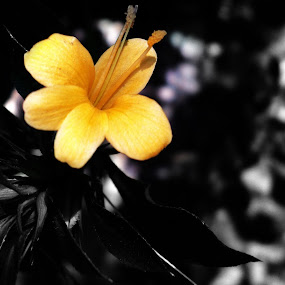yellow by Nirabhra Mandal - Nature Up Close Flowers - 2011-2013