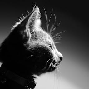 Milica by Jelena Seničić Vilimanović - Animals - Cats Kittens