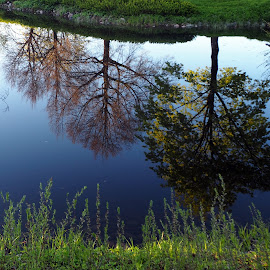 Duck pond in Imatra by Jouni Sakari Kemppinen - City,  Street & Park  City Parks ( mirror, water, reflection, park, trees )