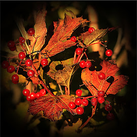 Tints of Autumn by Carol Lauderdale - Nature Up Close Trees & Bushes ( macro, hedgerows, autumn colours, berries and fruit, nature close up )