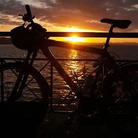 Sunset by Ester Ayerdi - Transportation Bicycles ( bicycles, bike, bikes, silhouette, sunset, shape, bicycle,  )