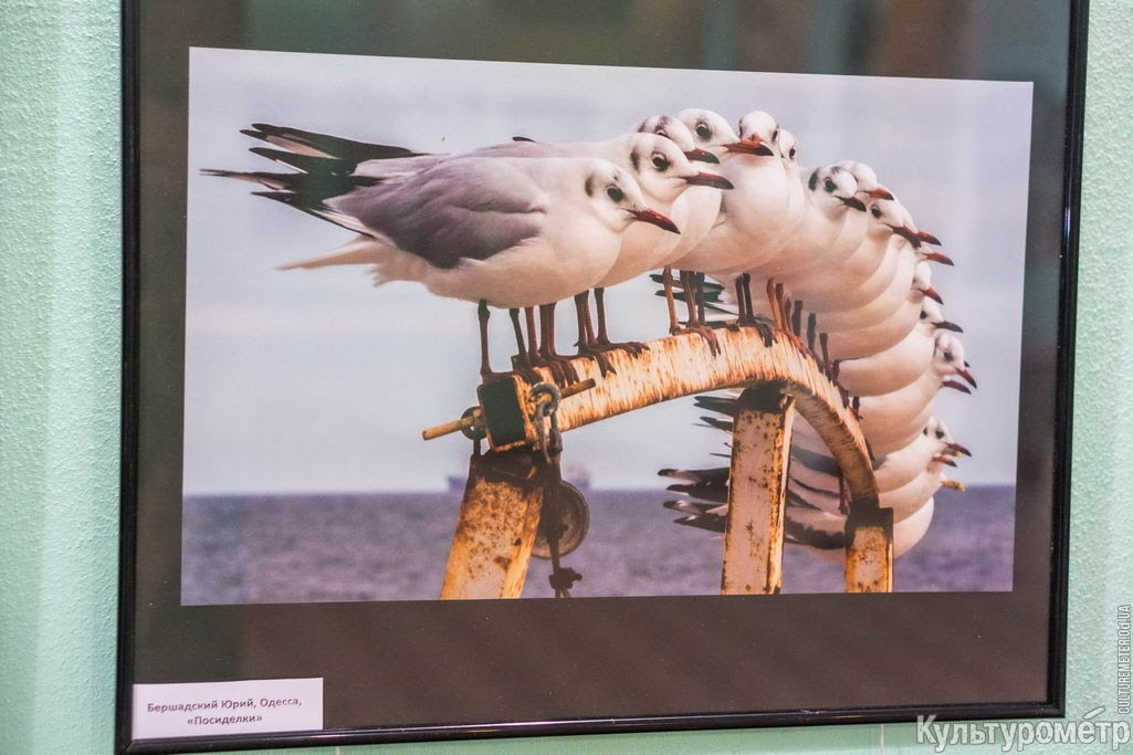 WrnrjjBB0gVBsO-64aM8IofxC2wlHHc72p2NNGVQvT-CRzd_34c_L6YYabaD5eJw5QAIpbbH8XJUSls=w1440-h810-no В Одессе лучшие фотохудожники открыли колоритную выставку