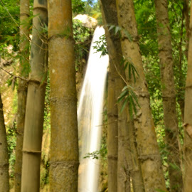 Trapped with Bamboos by Helton Balairos - Nature Up Close Other Natural Objects (  )
