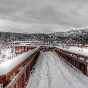 Snowy Boardwalk by Patricia Phillips - Buildings & Architecture Bridges & Suspended Structures ( boardwalks marshes potter-marsh, alaska )